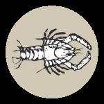 Koura Lodge Logo